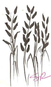 wheat-drawing