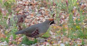 quails-backyard-view.jpg