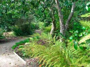 LYNETTE'S garden blog photo