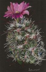 cactus flower copy