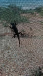 lizard on screen 1