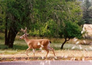 the deer king walks down the road