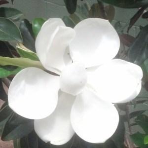 white flower at the bm copy
