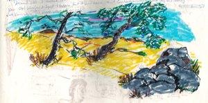 colors and landscape copy
