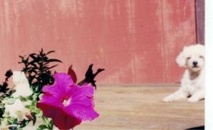 pebs and petunia