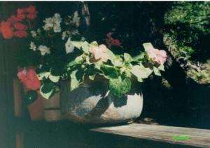 old california flower pot